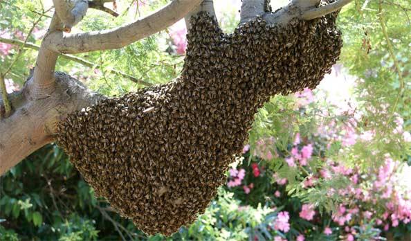 Rosso : La délégation de la Jica et de la Saed attaquée par un essaim d'abeilles, un mort et un blessé grave
