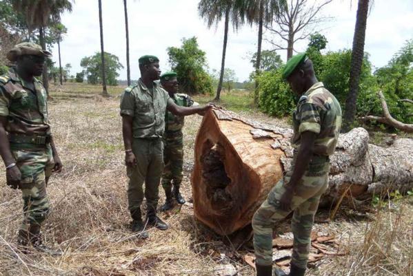 Sédhiou : Les 3 agents des eaux et forêts finalement libérés