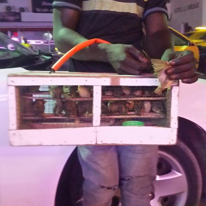 Insolite : les vendeurs d'oiseaux d'augure Dakar By Night