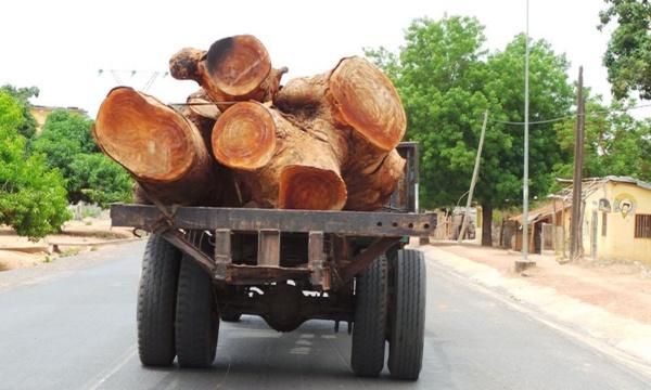 Sénégal-Gambie : Yahya Jammeh interdit l'importation de bois venant du Sénégal