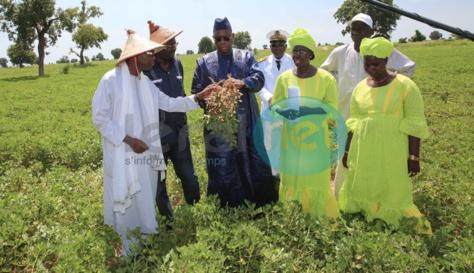 """Macky Sall à Kaolack et Kaffrine: """"Mon ambition est de faire des paysans des agriculteurs"""""""