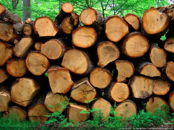 Trafic de bois, plus de 500 troncs d'arbres découverts dans les forêts de Maka et Dialocoto
