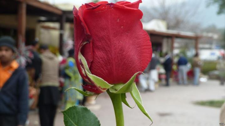 À Maiduguri, le berceau de Boko Haram, on célèbre aussi l'amour