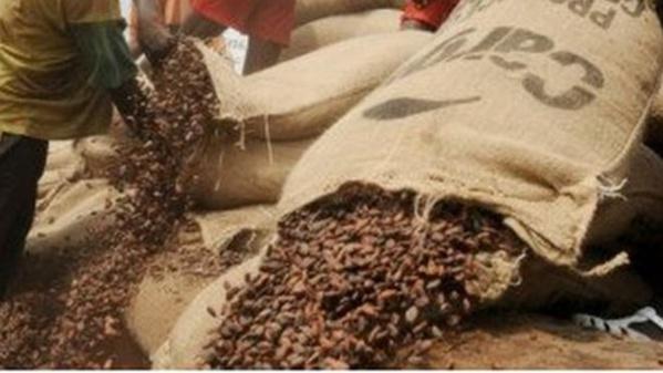 Des centaines de milliers de fèves de cacao sont en train de pourrir dans les ports de San Pedro et d'Abidjan.