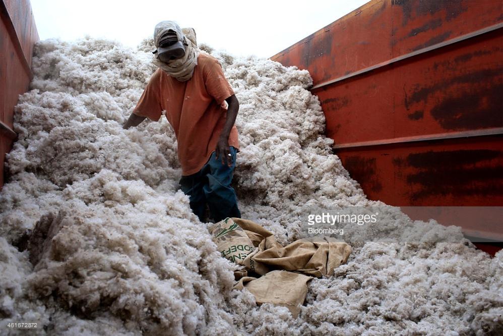 Sénégal : pourquoi la production cotonnière de Sodefitex a baissé en 2016
