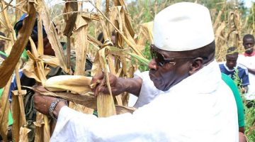 Jammeh dans un champs de maïs en Gambie