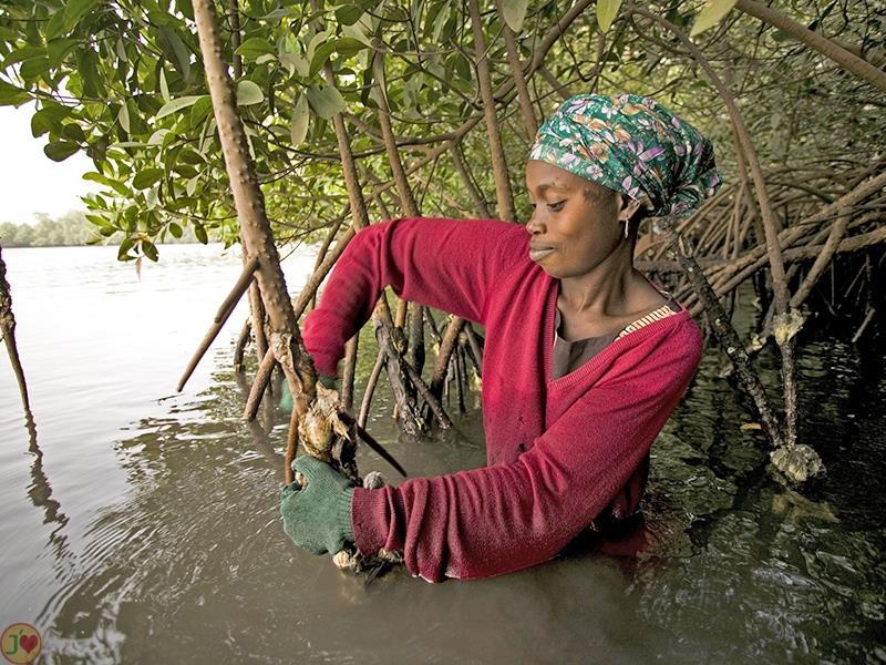 (Images) La mangrove de palétuviers du delta du Saloum