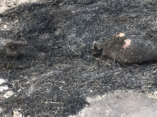 Audio:Incendie au Daaka: un jeune fumeur serait à l'origine du feu meurtrier