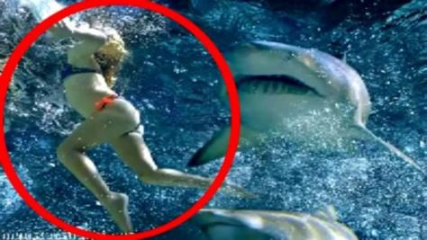 Attaquée par un grand prédateur marin sur la plage de Wylie Bay, dans l'Ouest de l'Australie, une jeune surfeuse n'a pas survécu à de terrifiantes morsures.