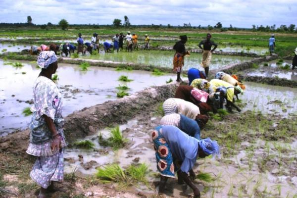 Nord du Sénégal: Une région clé pour l'autosuffisance
