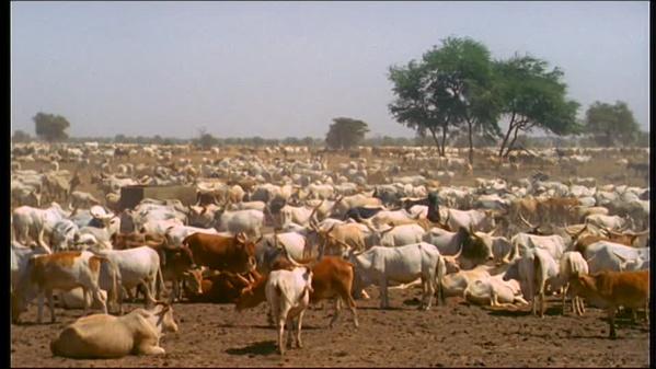 La loi sur le vol de bétail bien accueillie par les éleveurs