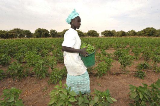 6% de croissance du PIB sur 3 années consécutives, une première pour le Sénégal ?