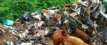 Les ordures envahissent la ville