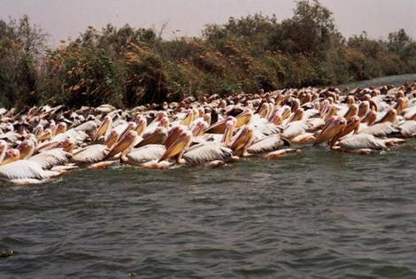 Le royaume des oiseaux se trouve au Sénégal