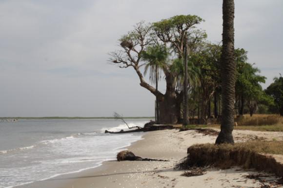 L'île de Dionewar, l'heure de la riposte face aux changements climatiques