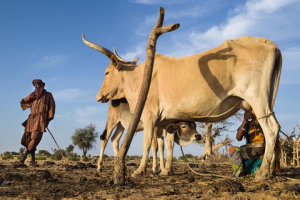 Matam : Un jeune commerçant tué par un berger