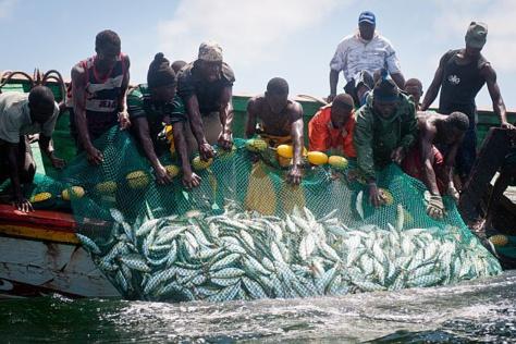 Pêche illégale : 13 pêcheurs sénégalais expulsés de Mauritanie, d'autres entre les mains des garde-côtes