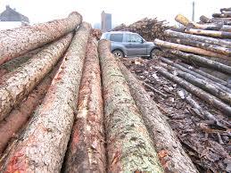 Coupe illégale de bois à Kolda : Les gardes forestiers saisissent 17 charrettes, 18 ânes et 24 billons de vène