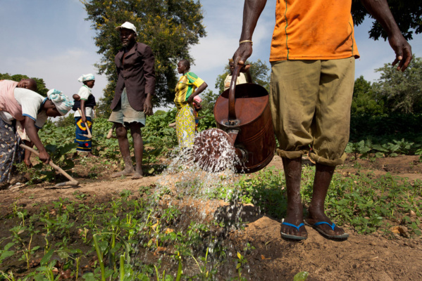 Performances et résultats du secteur agricole : Le financement sur ressources propres, s'élève à 150 milliards de FCfa