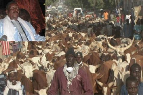 Magal Touba 2017 : Cheikh Béthio attend plus de 4000 bœufs et plus d'un milliard en guise de «aadiya »