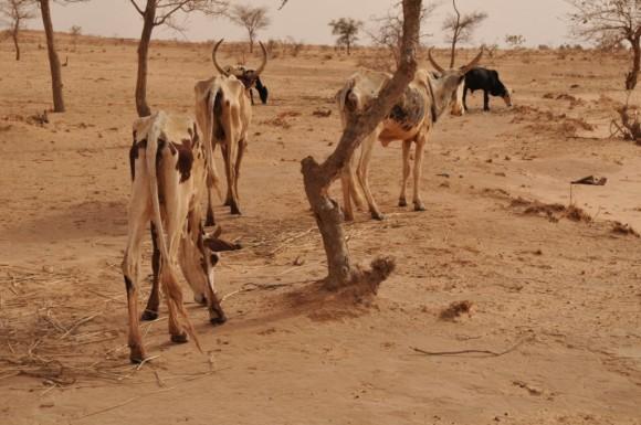 Rareté des pluies dans le nord du pays : le CNCR alerte sur le risque d'une crise alimentaire