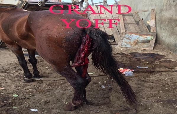 Le bourreau du cheval déféré avant-hier, à Rebeuss