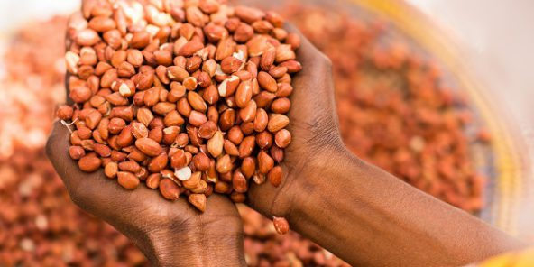 Campagne arachidière : L'Ue rejette l'arachide sénégalaise