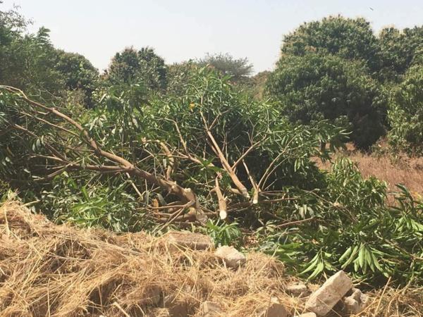 Ngékhokh : les impactés de l'autoroute accusent Ageroute et les Chinois d'expropriation via bulldozer... sans indemnisation