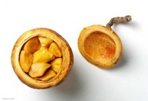 SAVEURS D'UN FRUIT EXOTIQUE : Ces hommes qui consomment le « Madd »