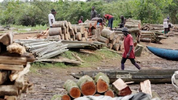 Coupe de bois en Casamance: vive tension entre les maires de Sindian et de Oulampane