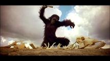 QUARTIER MONTAGE EXTENSION DE SANTHIANE : Un mystérieux singe sème la panique dans la périphérie de Louga