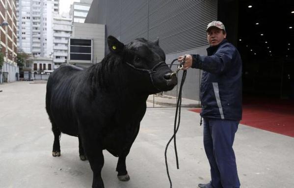Coupe du monde 2018: Des agriculteurs argentins nomment un taureau «Mbappé» en l'honneur du champion