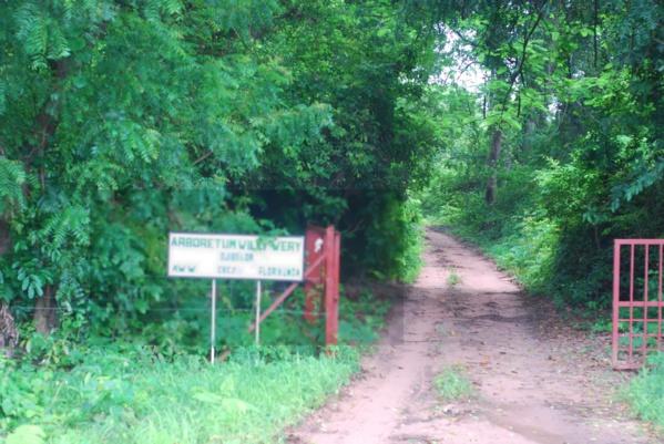 Casamance: Quatre exploitants forestiers portés disparus