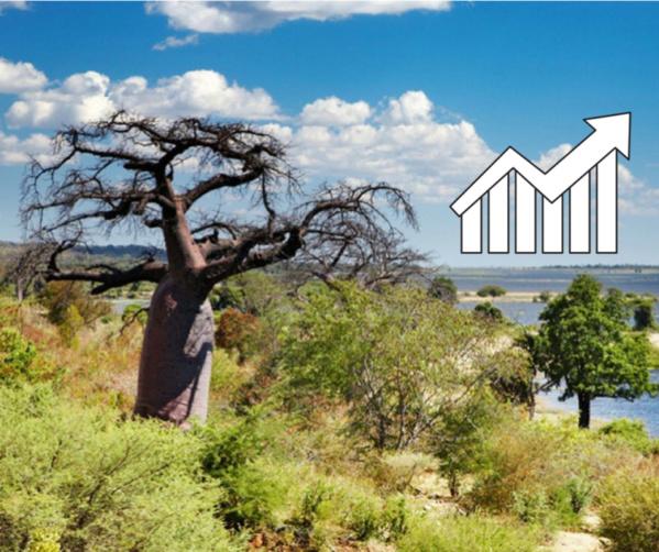 La Casamance sous Macky Sall : les réalisations majeures depuis 2012 et les nouvelles initiatives
