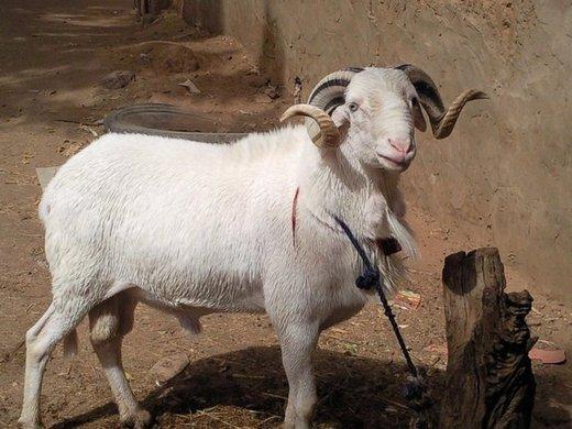 TABASKI 2010 : la fête prévue le 17 novembre au Senegal , Le ministre de l'Elevage va renforcer la sécurité dans les foirails •