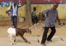 CELEBRATION DE LA FÊTE DE TABASKI : Quand on s'endette pour acheter un mouton
