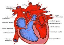 Prise en charge des maladies cardiovasculaires : Le Sénégal sera doté d'une salle d'angiographie en 2011