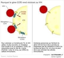 Un patient peut-être «guéri» du sida après une greffe