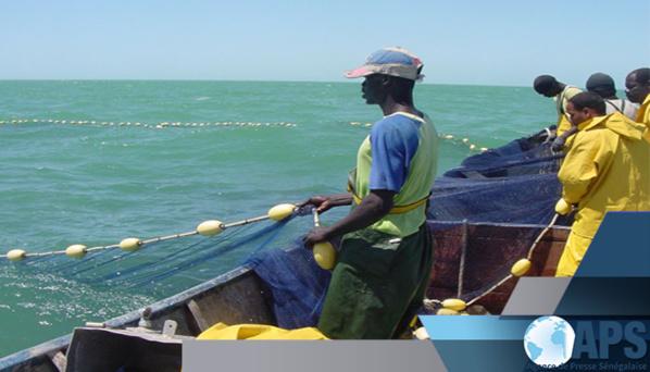 Pêche- Préservation de la ressource: Le Directeur des Pêches maritimes détaille les nouvelles mesures