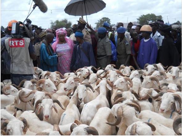 Les éleveurs aux côtés de Aminata Mbengue Ndiaye parrainent Macky Sall