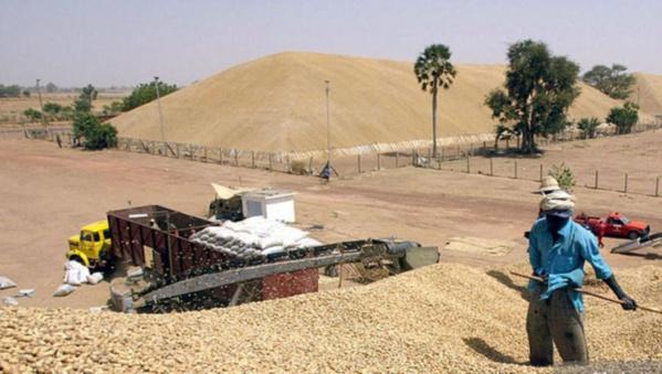Invendus de l'huile raffinée d'arachide : L'Etat prend le contrôle