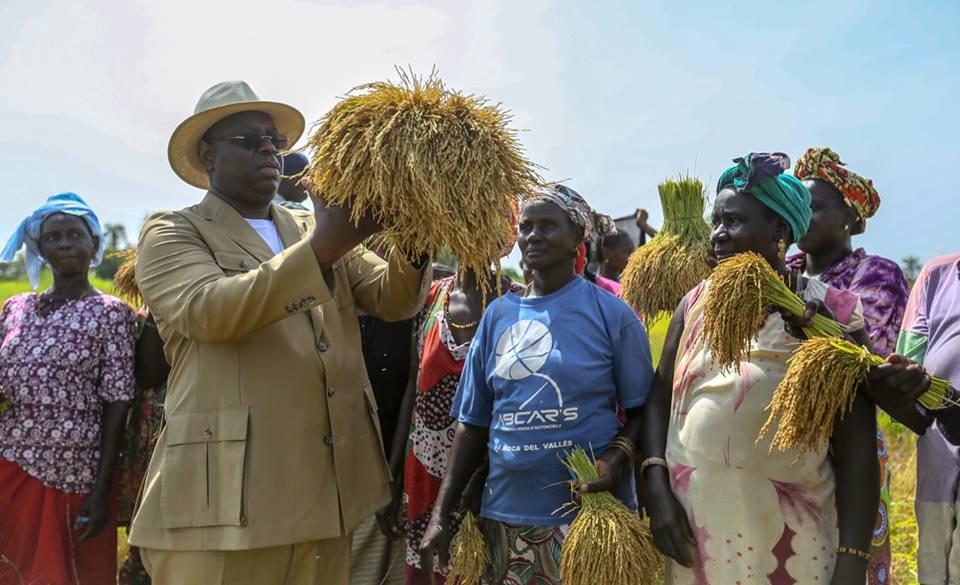 Photos : Macky Sall avec les femmes de Bigona dans les rizières de Diaroumé