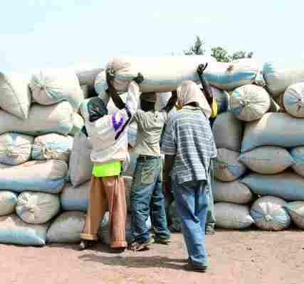 Campagne arachidière : les paysans du Saloum n'ont pas encore vu la couleur de leur argent