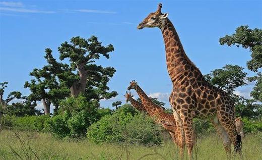 Un incendie ravage la réserve animalière de Bandia