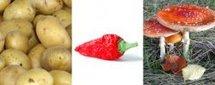 Le top 5 des aliments toxiques