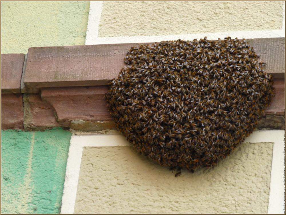 Des abeilles causent deux morts à Diourbel
