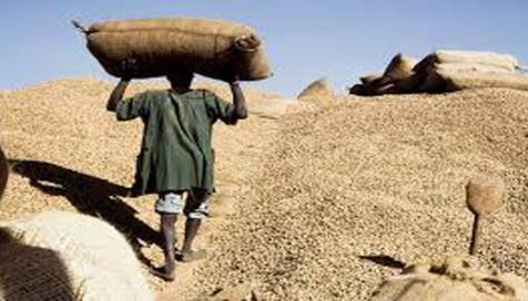 Le prix du kilogramme d'arachide fixé à 210 francs Cfa