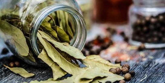 Les feuilles de laurier pour lutter contre les pellicules et la chute des cheveux