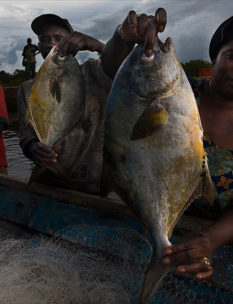 La pêche Sénégalaise en effervescence