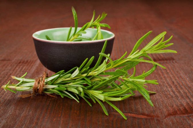 Le romarin: un remède naturel contre l`hypotension